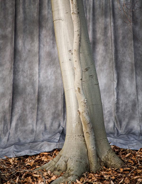 November2009Rochester2(Isaac Gordon Nature Center)