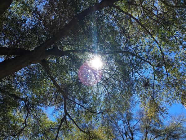 AL trees